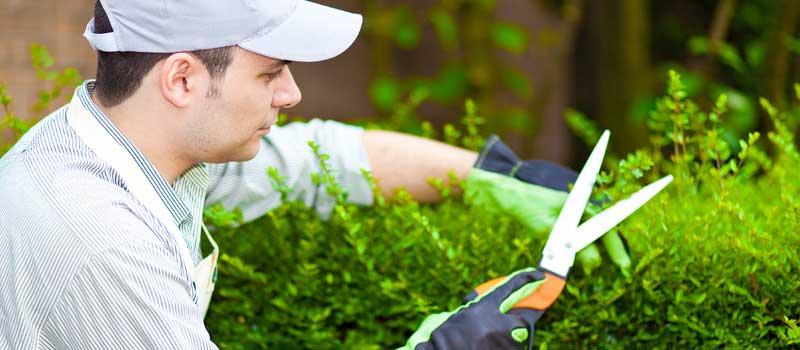 gardening handyman